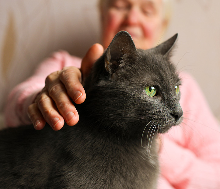 A woman pets a grey cat